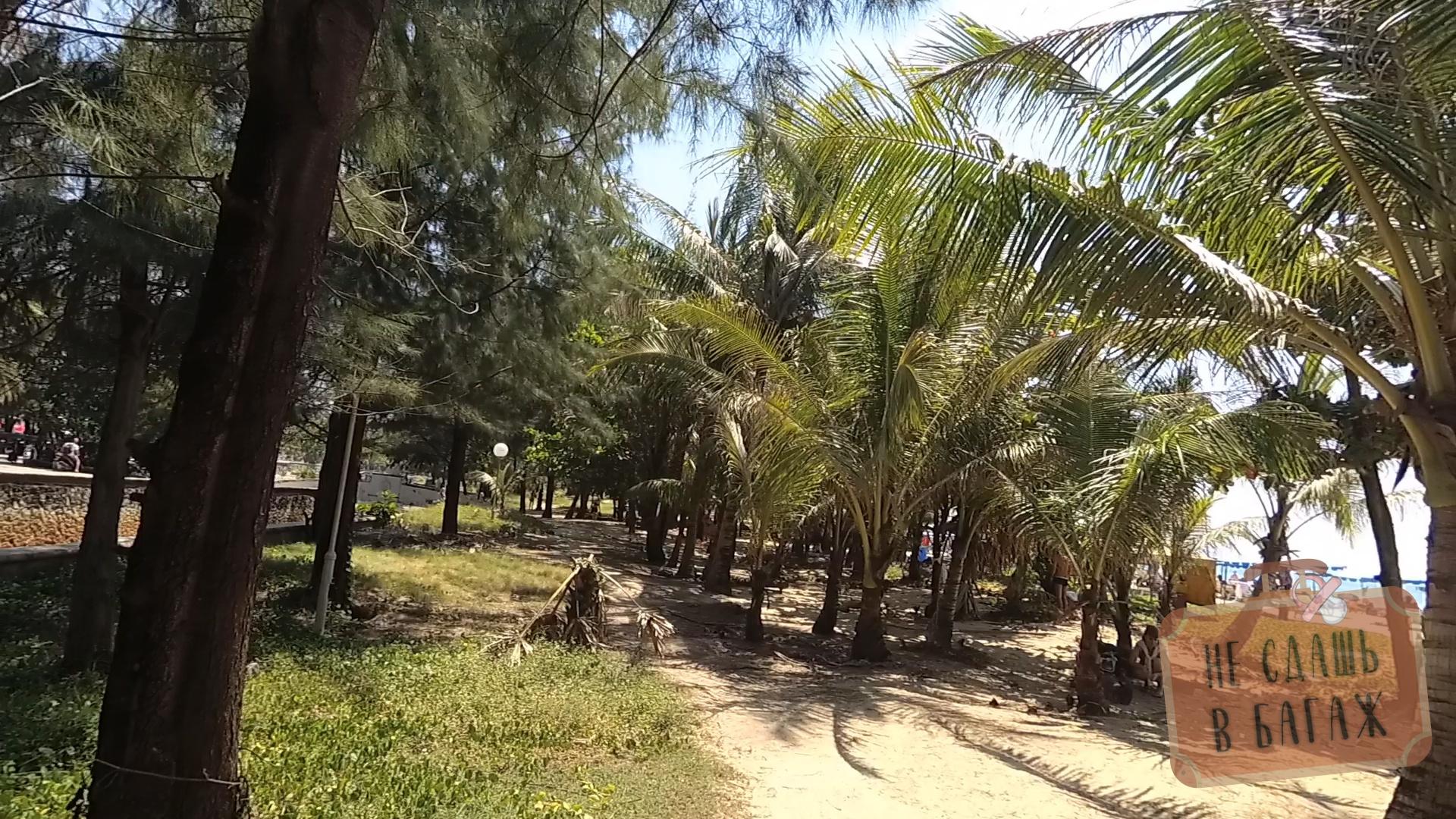 Пальмы на пляже Карон