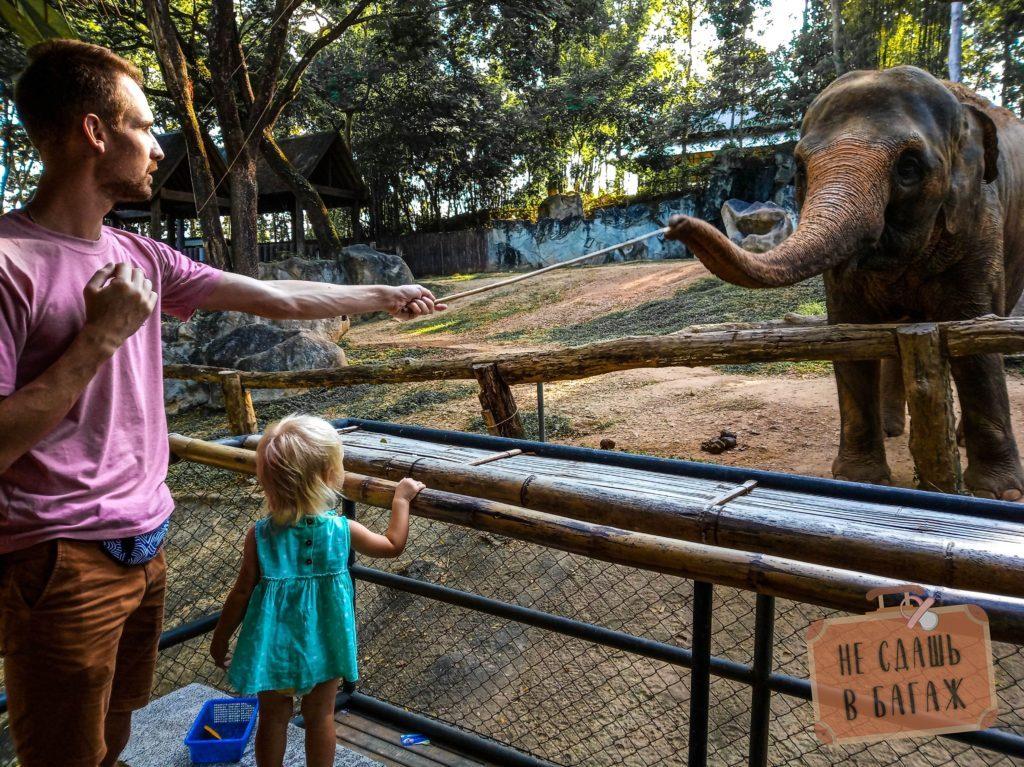 Кормление слонов в зоопарке Чиангмай