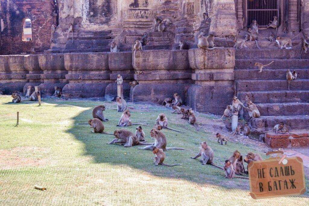 Тысячи особей живут на территории храма обезьян