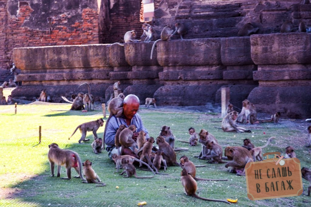Специальный человек, смотритель за обезьянами