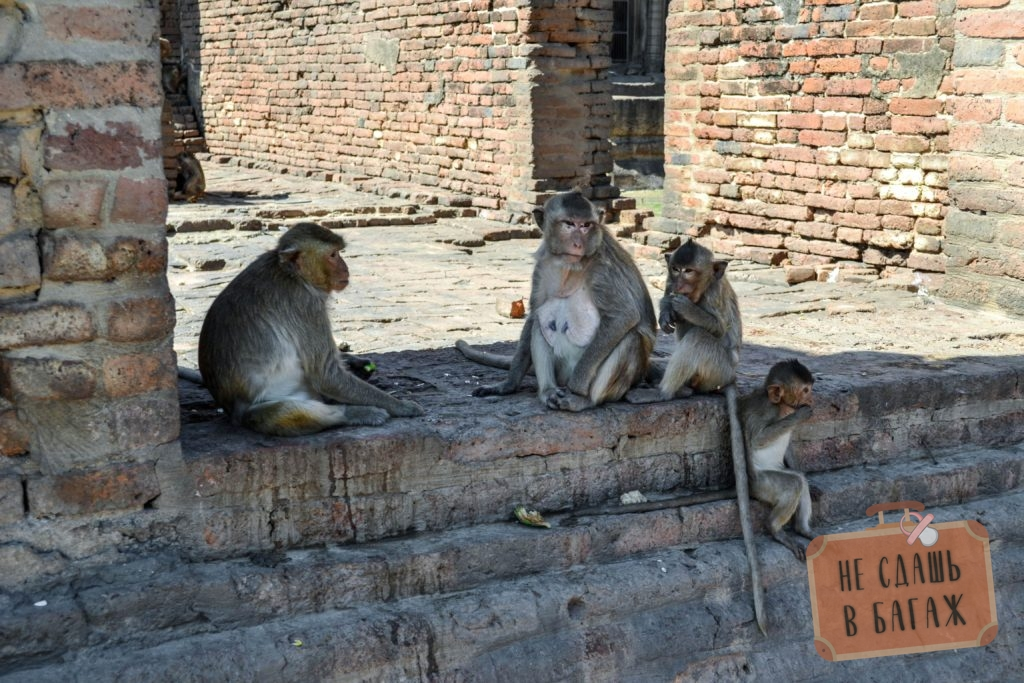 Маленькая обезьянья семья в большом городе обезьян