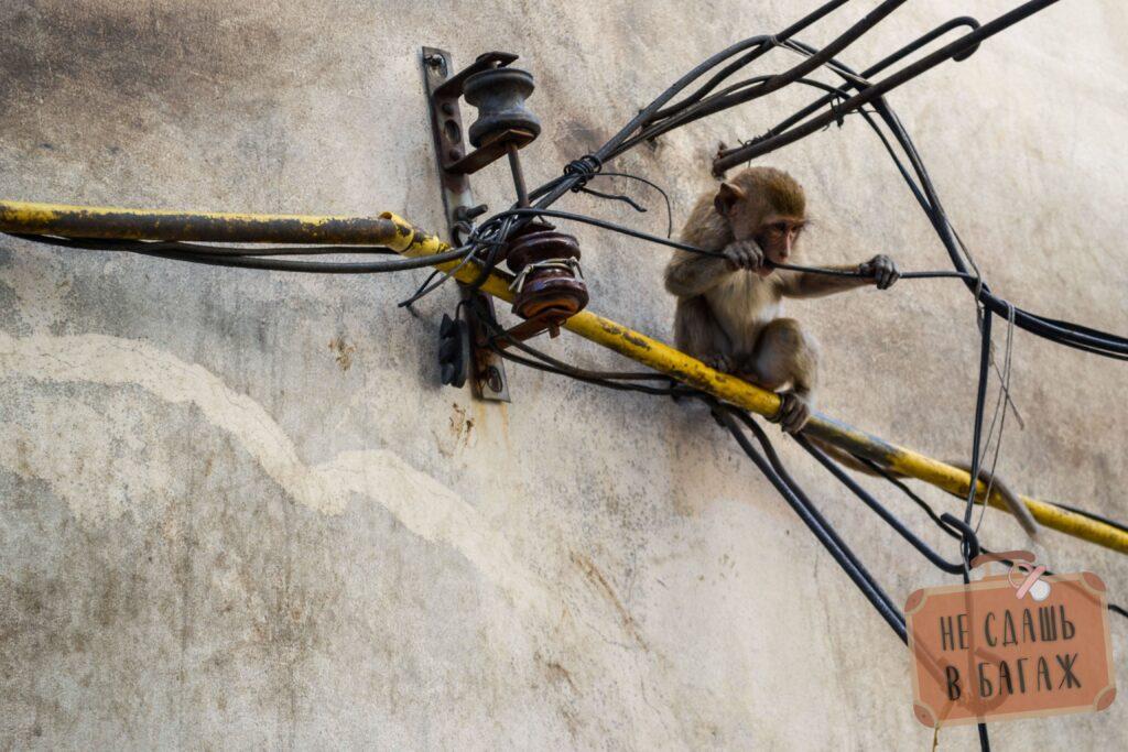 Обезьяны любят погрызть провода