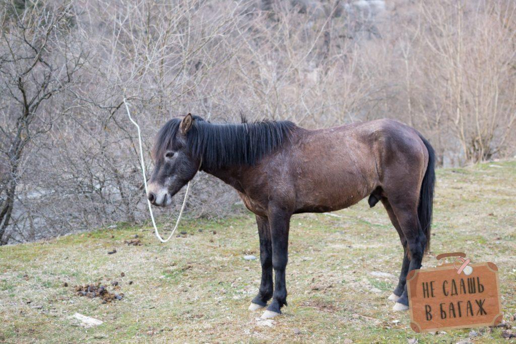 Лошадь в Боржоми