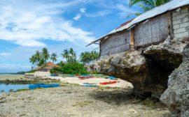 Сикихор Филиппины