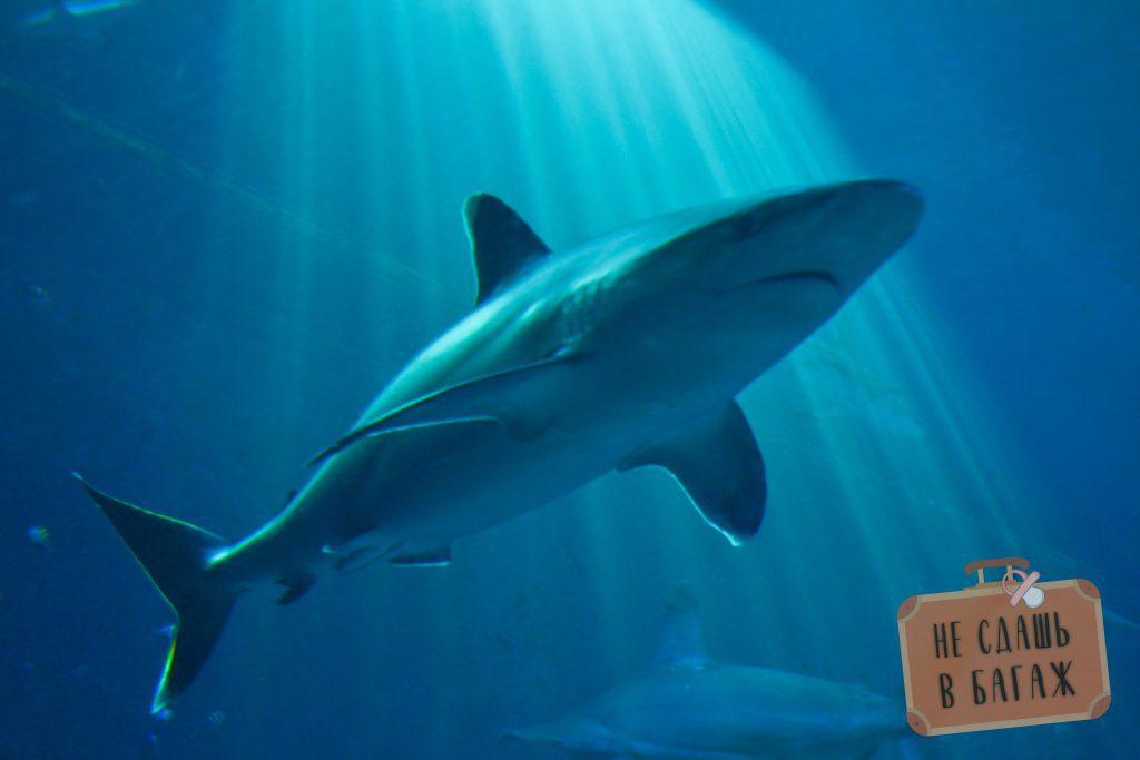 океанариум Сингапура акула