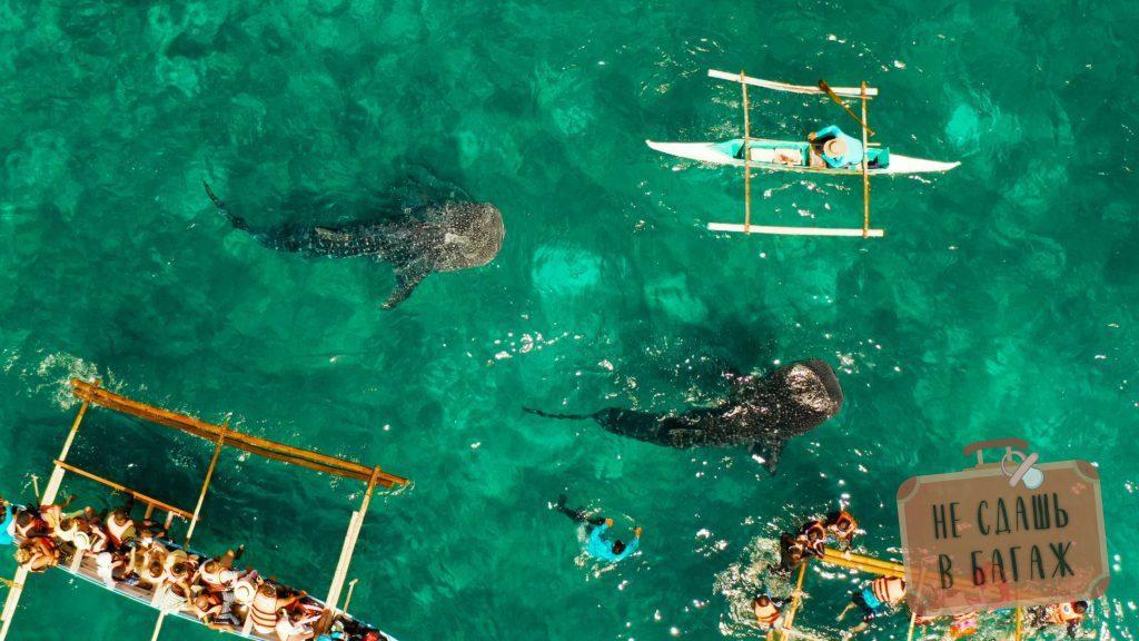Плавание с китовыми акулами в Ослобе Себу