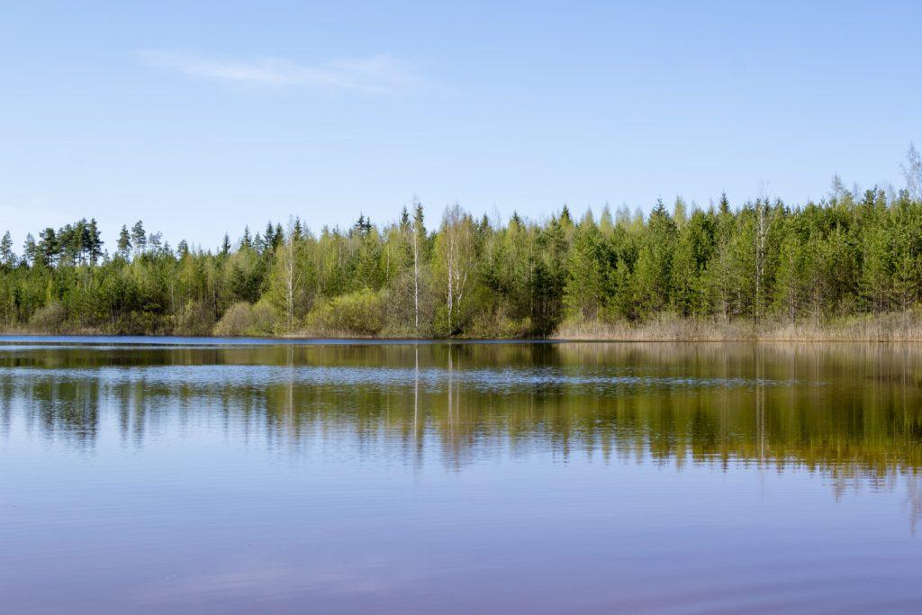 Озеро и лес у Лужского каньона